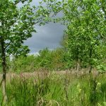 2 mile nature walk around Snipe Dales – Wednesday 22nd May & 26th June